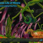 secret life rivers