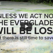 save the everglades