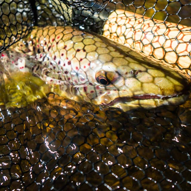 Booking Spring Trout Trips