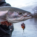 Booking Winter/Spring Steelhead Trips Now