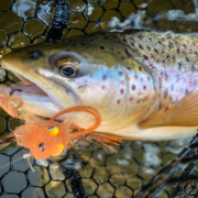Upper Manistee Trout Fishing Report