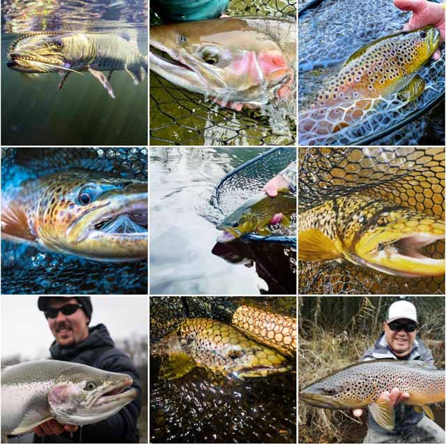 Best Fly Fishing of 2020